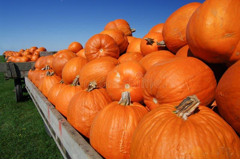 Pumpkin Carts royalty free stock image