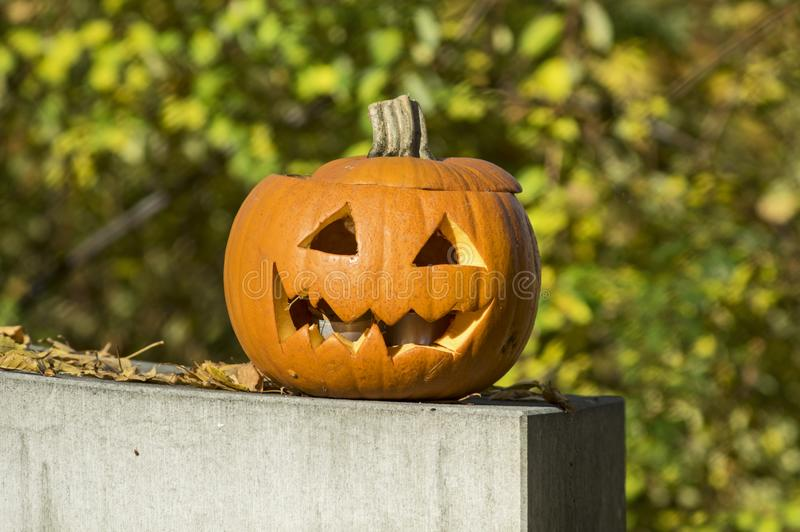 Pumpkin with carved face on a day in fall royalty free stock images