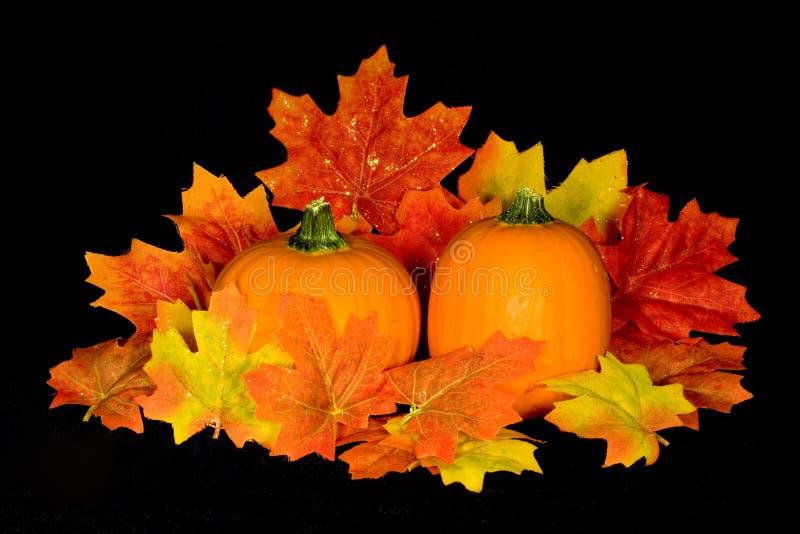 Pumpkin Centerpiece. Miniature pumpkin and fall maple leaf centerpiece on background of black micro velvet stock images