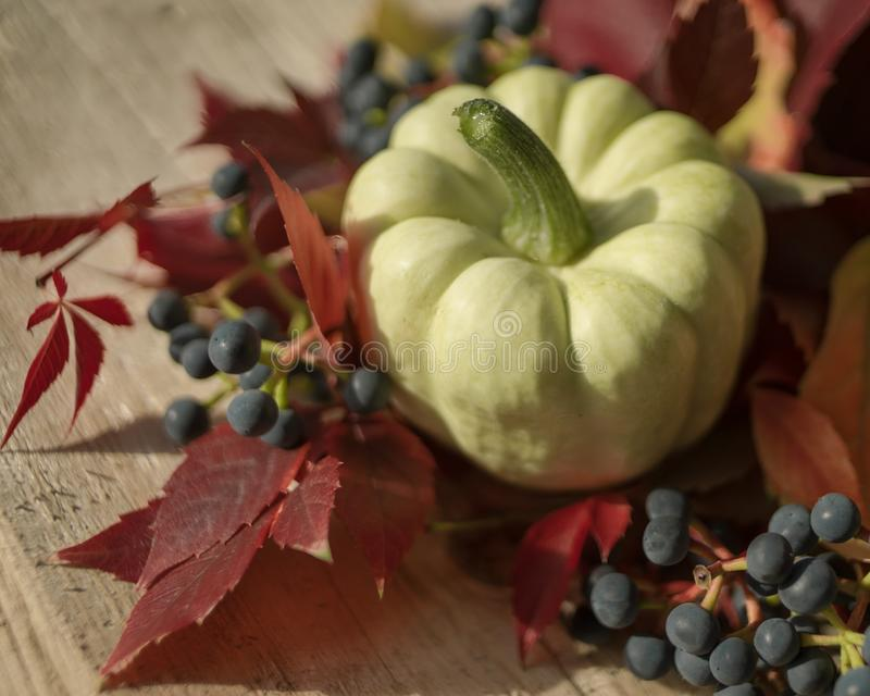 pumpkin close-up red leaves blue berries still life autumn macro bokeh background stock image