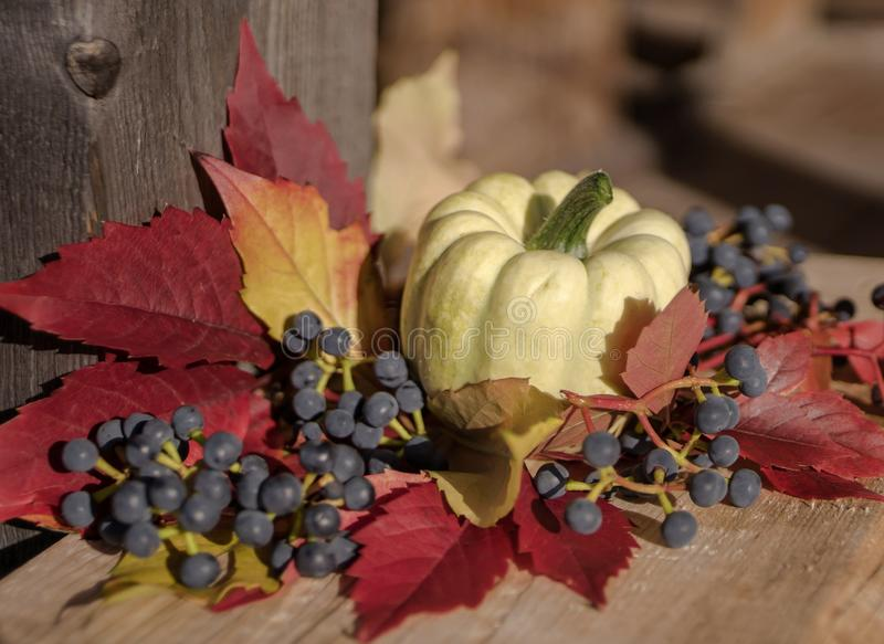 pumpkin close-up red leaves blue berries still life wood background outdoor sunlight stock image