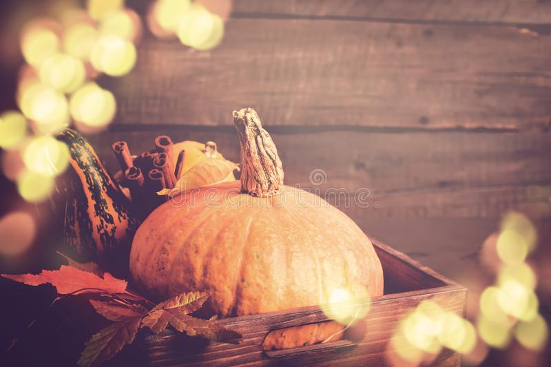 Pumpkin closeup. Autumn Bokeh lights background. Thanksgiving or Halloween concept, copy space royalty free stock image