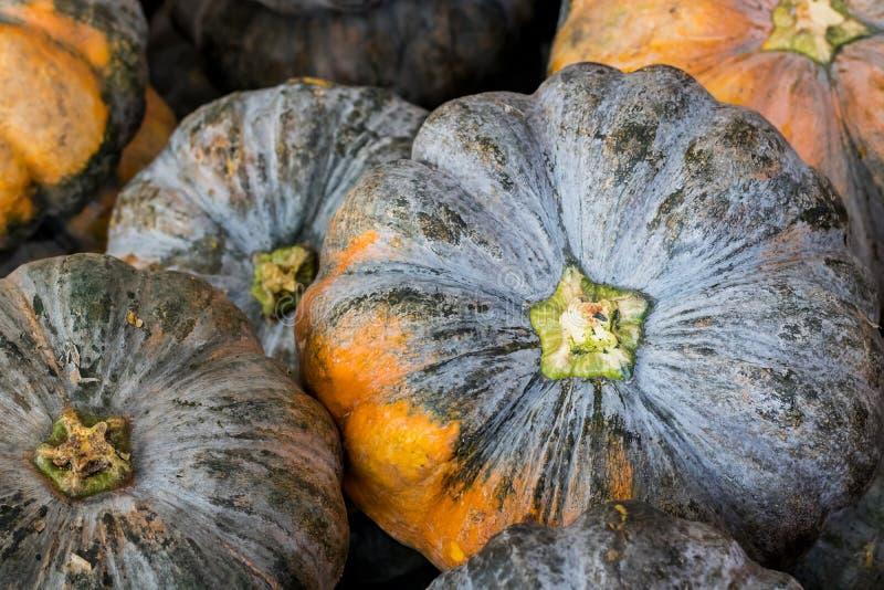 Big pumpkin close up stock images