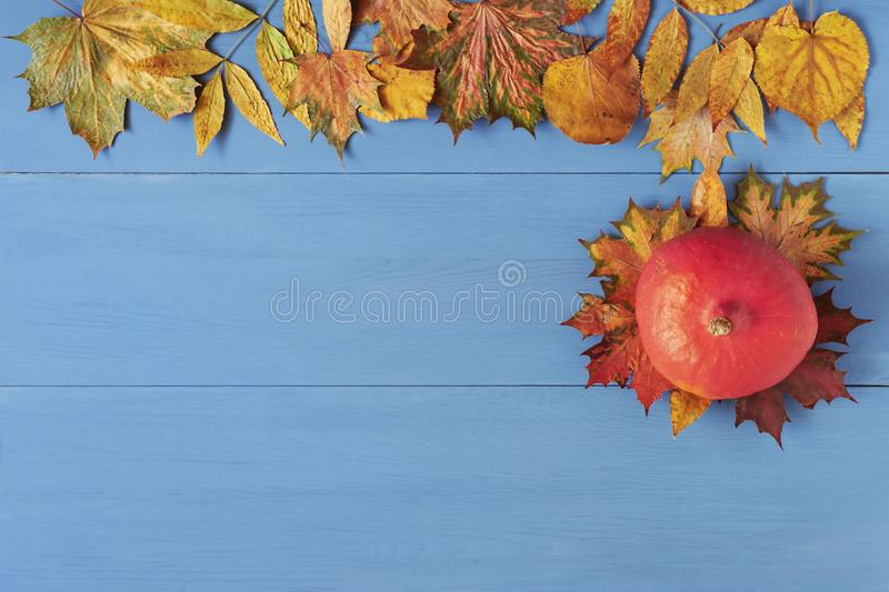 Pumpkin and colorful autumn leaves on blue wooden table. Fall, Thanksgiving, Halloween background stock photo
