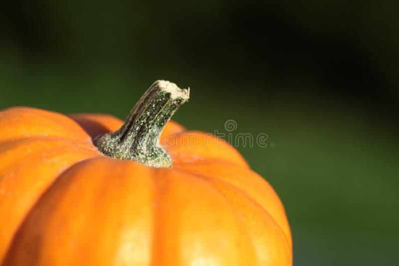 Pumpkin Detail Royalty Free Stock Photos