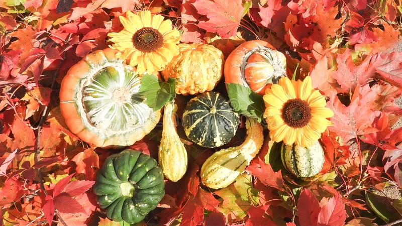 Pumpkin in different types royalty free stock images