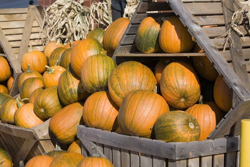 Download Pumpkin Display Stock Photo - Image: 11249400