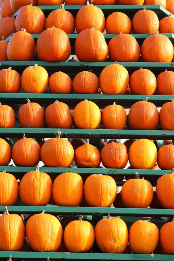 Free Pumpkin Display Royalty Free Stock Image - 16858486