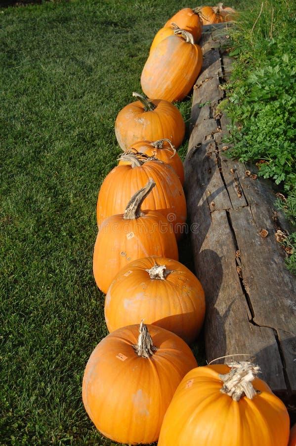 Pumpkin display royalty free stock image