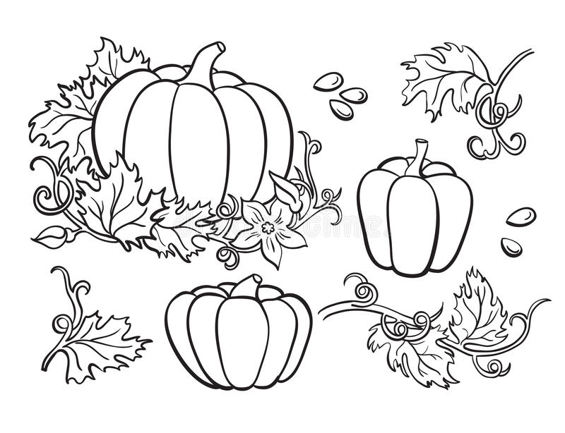 Pumpkin drawing set. Isolated outline vegetable, plant, vector illustration