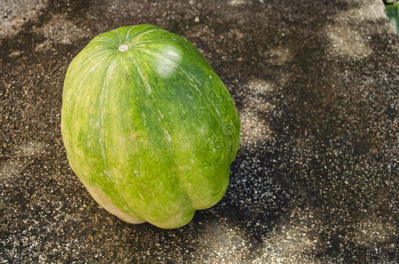 Pumpkin in Filtered Sunlit Shade royalty free stock images