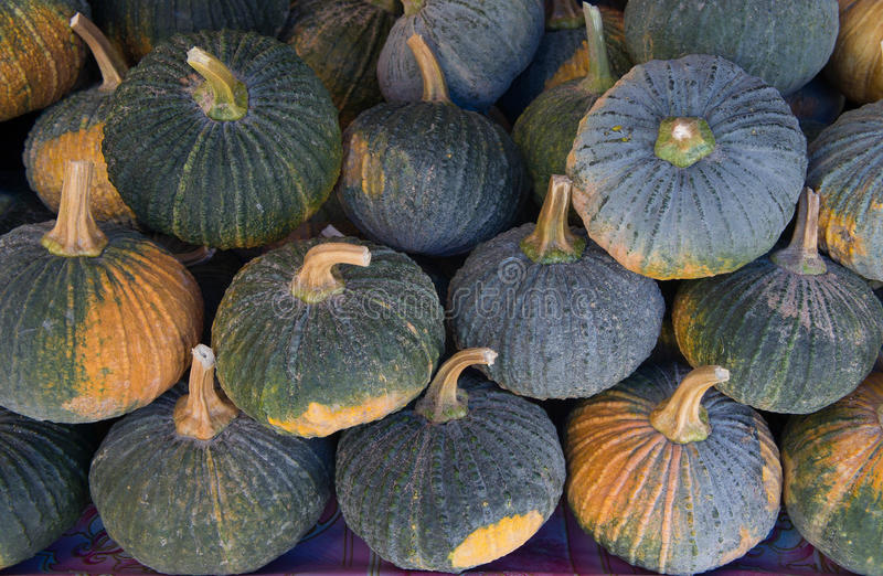 The Pumpkin is a fruit and vegetable species. Sold in the market stock image