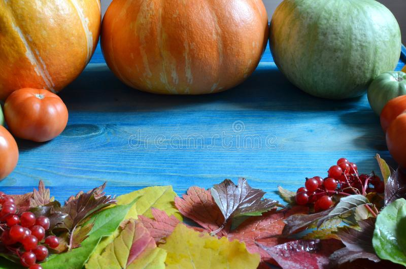 Pumpkin fruits orange and green and autumn leaves on a blue background in the morning light royalty free stock image
