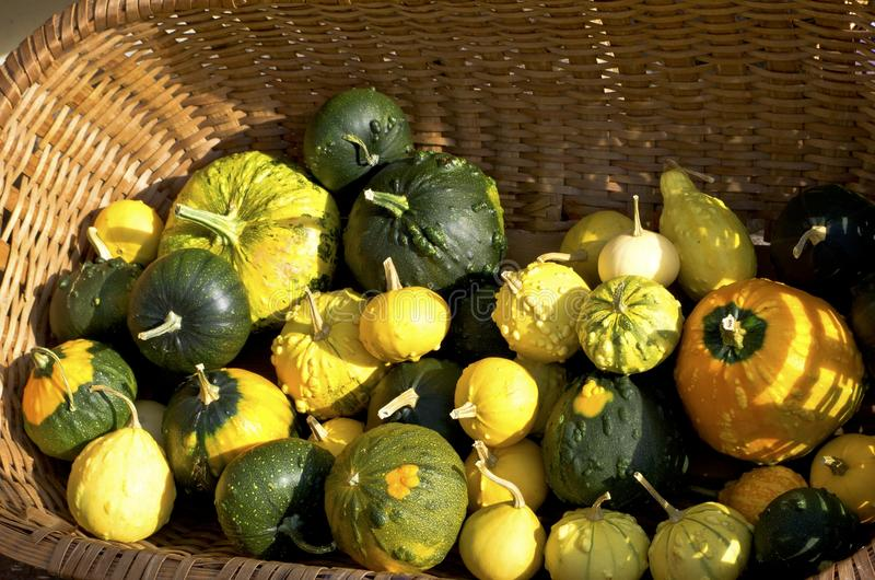 Pumpkin and gourd stock image
