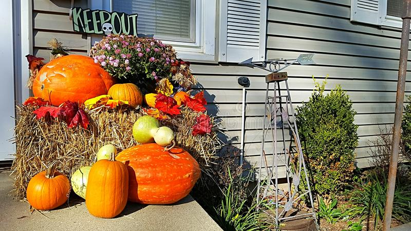 Pumpkin and Gourd Display royalty free stock image