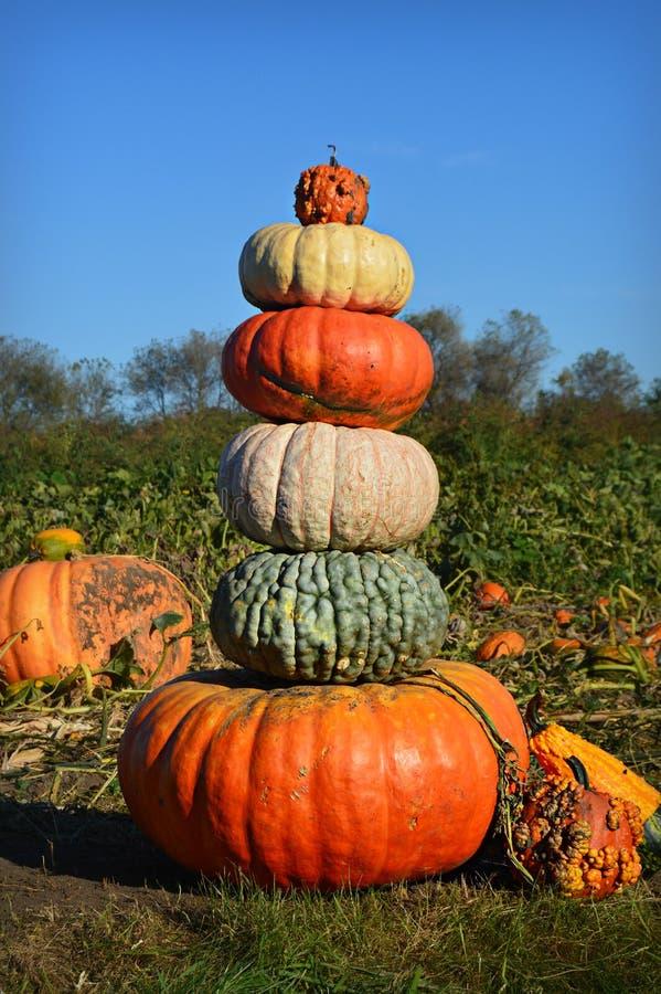 Pumpkin Gourd Tower royalty free stock photos