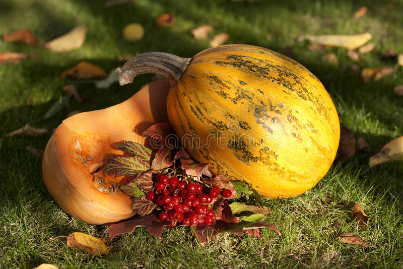 Download Pumpkin on grass stock image. Image of up, color, place - 28952727