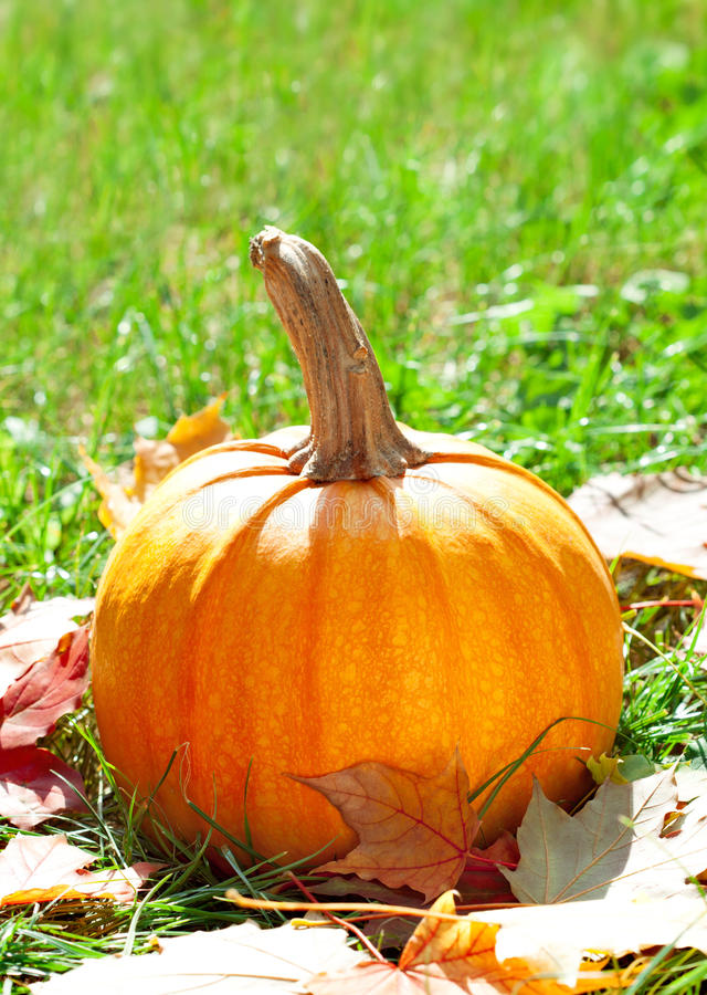 Pumpkin on green grass with autumnal leaves