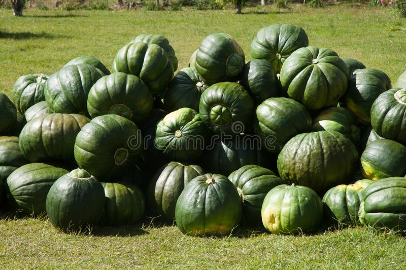 Pumpkin group after harvest royalty free stock photo