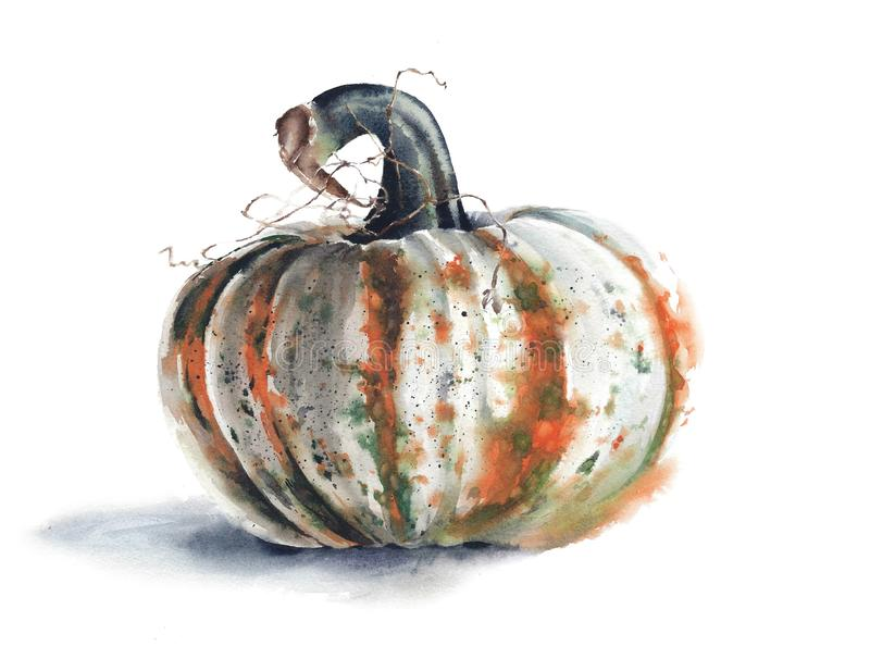 Pumpkin Halloween thanksgiving watercolor painting illustration isolated on white background. Still life royalty free illustration
