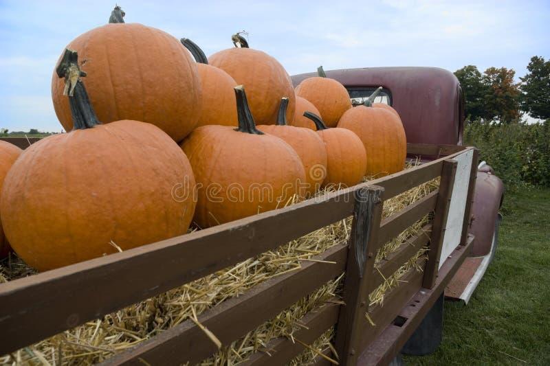 Pumpkin harvest royalty free stock photography