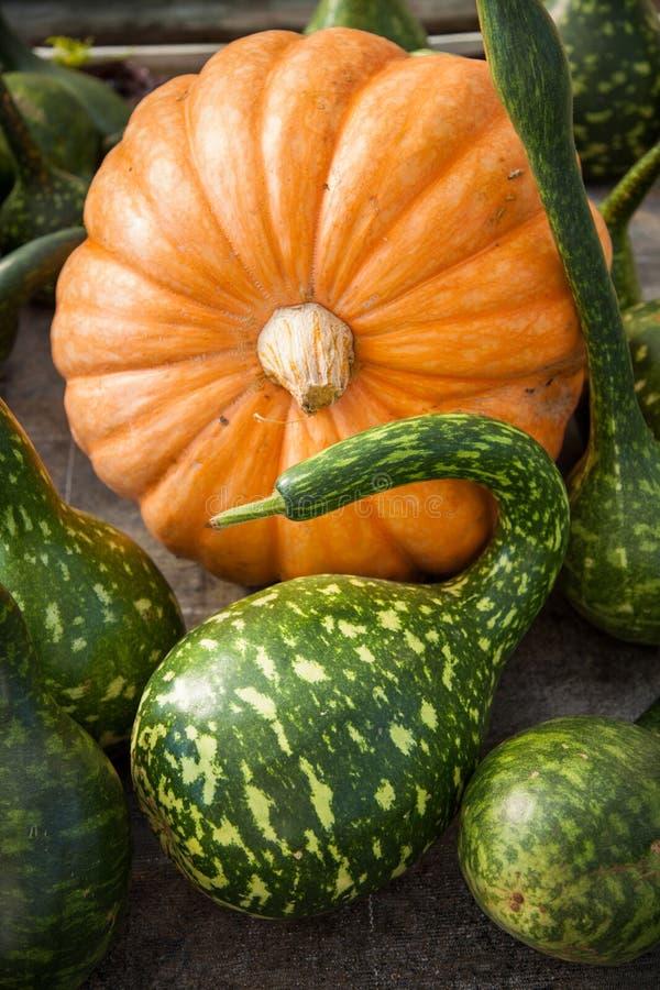 Pumpkin harvest royalty free stock photo