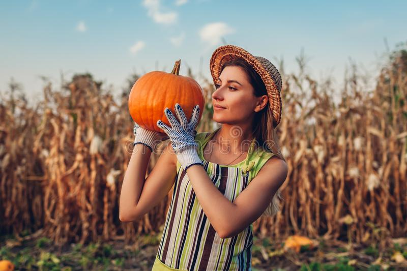 Pumpkin harvest. Young woman farmer picking autumn crop of pumpkins on farm. Agriculture. Thanksgiving and Halloween stock photography