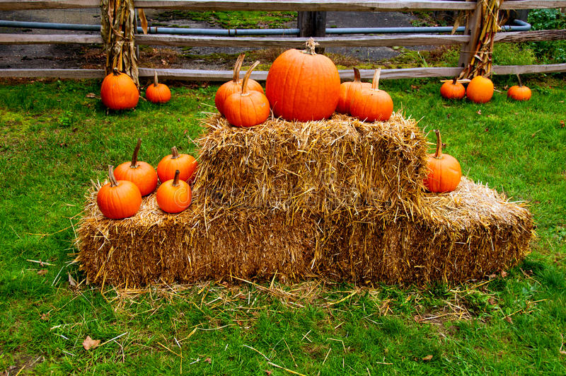 Pumpkin and Hay stock image