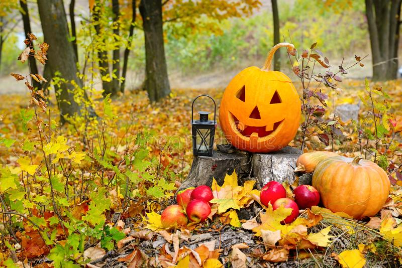 Pumpkin-head against a background of an autumn forest royalty free stock photo