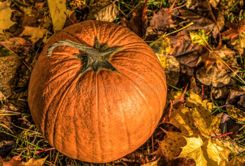 Pumpkin with leaves stock photography