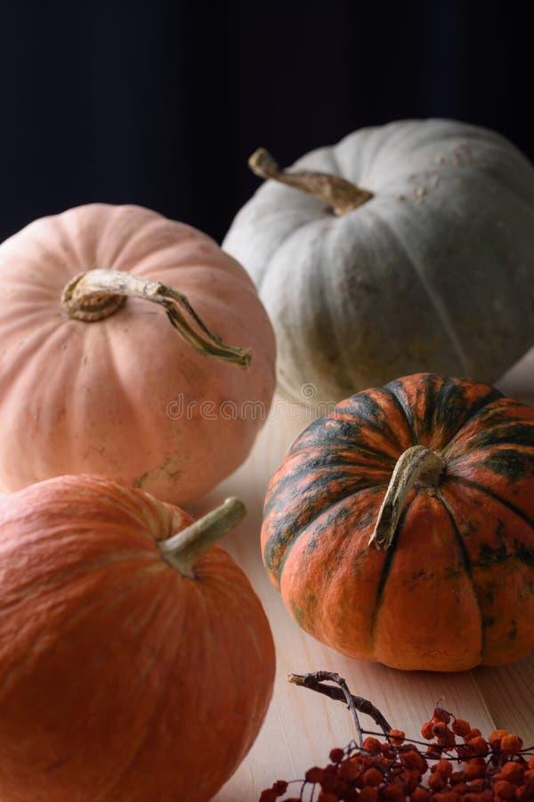 南瓜、膳食、蔬菜、品种、成熟、垂直、生、天然、有机、食品、生活方式、收获 免版税库存照片