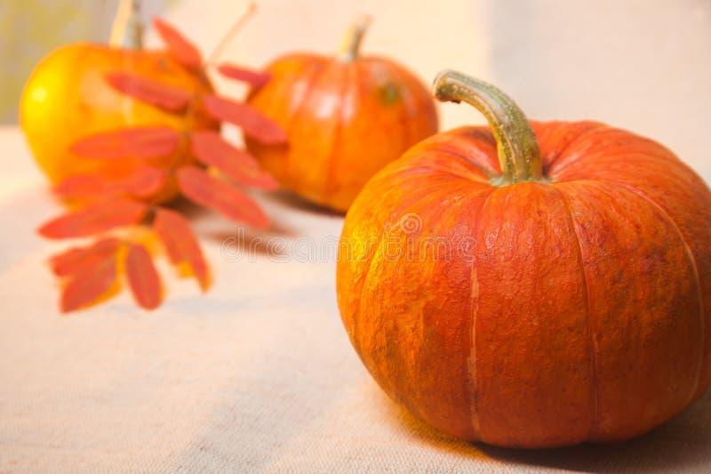 Download Pumpkin stock photo. Image of white, orange, squash, object - 88980036