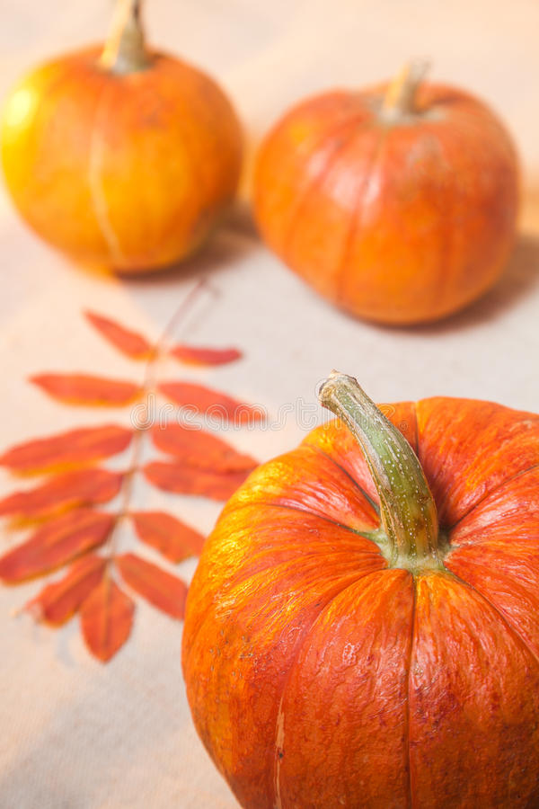 Download Pumpkin stock photo. Image of healthy, squash, pumpkin - 88982666
