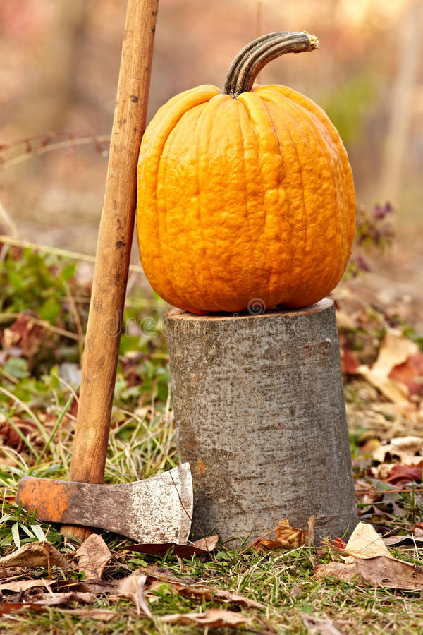 Download Pumpkin outdoor stock image. Image of orange, outdoor - 22133793