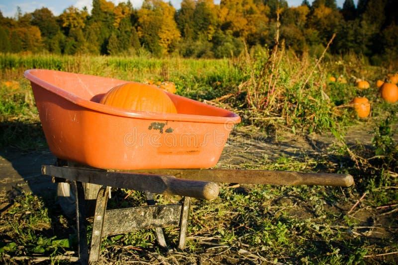 Download Pumpkin patch stock image. Image of harvest, picking - 10448229