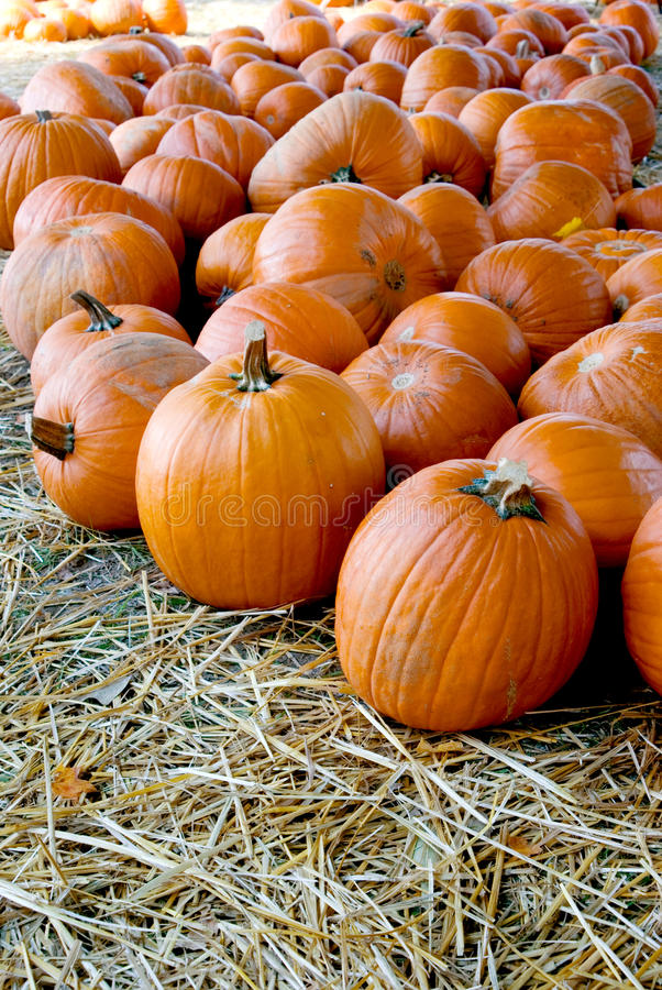 Download Pumpkin Patch stock image. Image of fall, daytime, festival - 10852847
