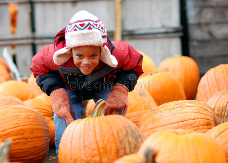 Download Pumpkin Patch stock photo. Image of cider, african, season - 1497664