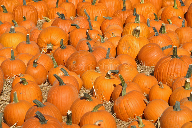 Pumpkin Patch_2 Stock Images