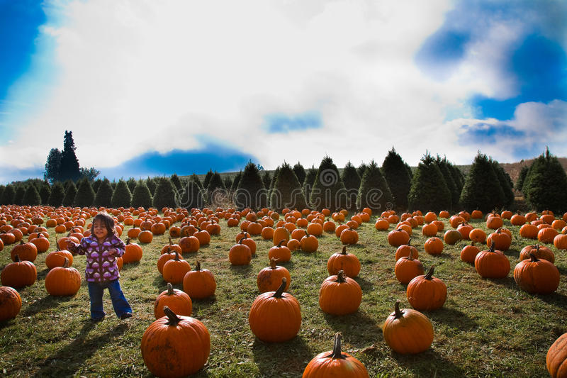 Download Pumpkin patch stock photo. Image of smile, patch, white - 21342398