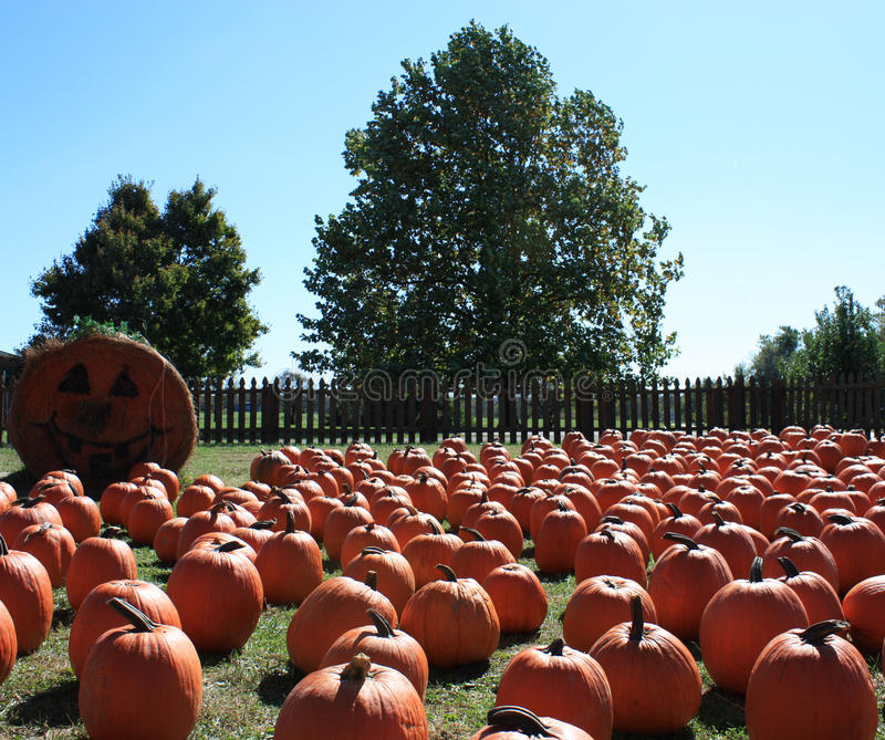Download Pumpkin patch stock image. Image of fence, stem, autumn - 21608497