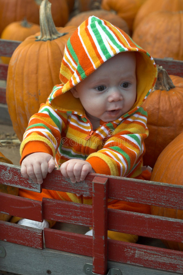 Download Pumpkin Patch stock photo. Image of autumn, hood, happiness - 2311614