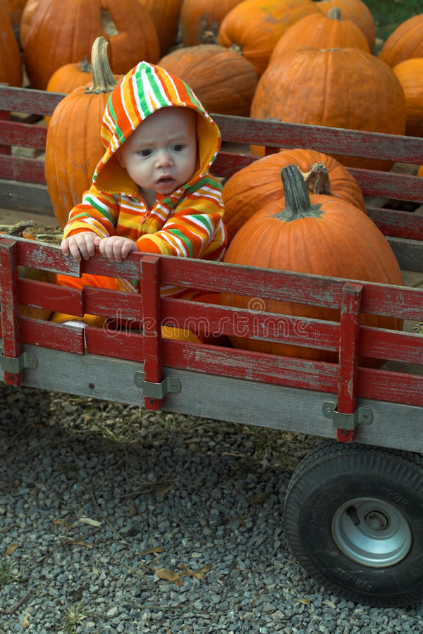 Download Pumpkin Patch stock photo. Image of carefree, baby, beaming - 2311616