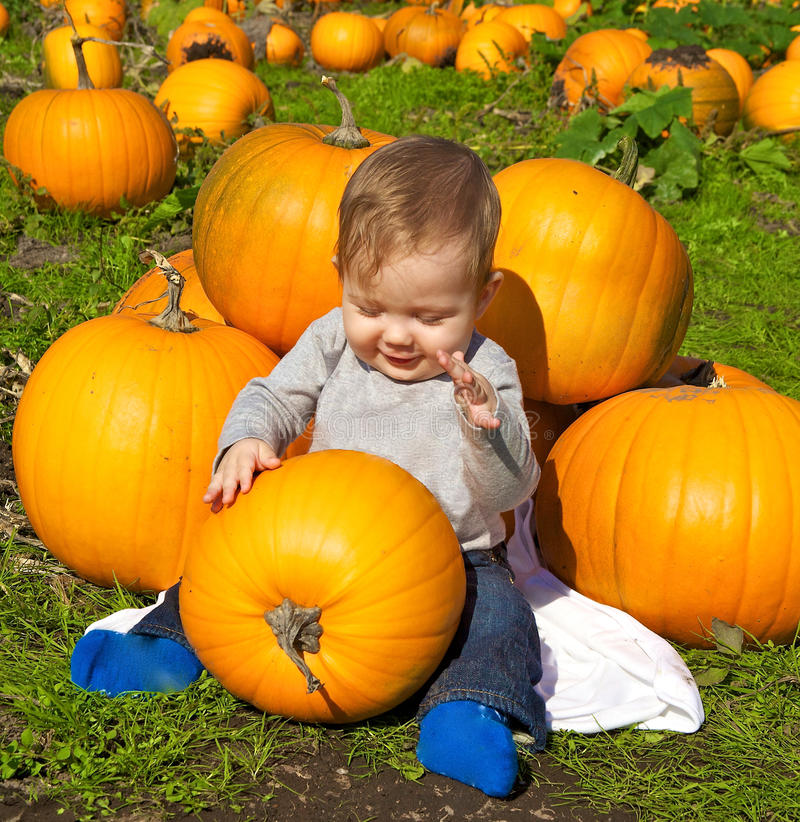 Free Pumpkin Patch Stock Photos - 27036993