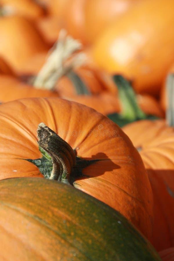 Pumpkin Patch 6 Stock Photos