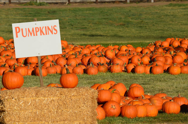 Pumpkin Patch with blank pumpkin sign stock photo