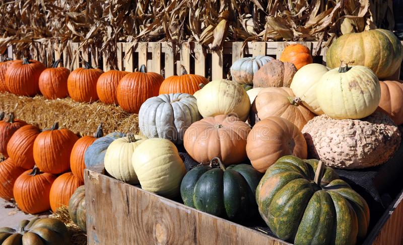 Pumpkin Patch at Michigan city during Fall royalty free stock photo