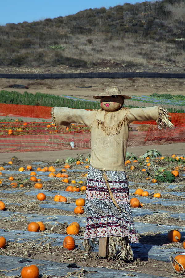 Pumpkin Patch Scarecrow Royalty Free Stock Photography