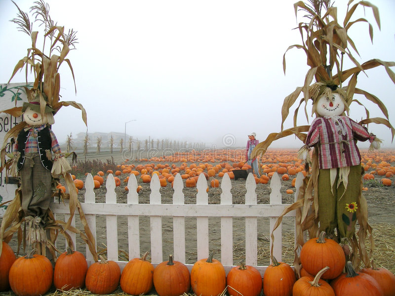 Download Pumpkin Patch Scarecrows With Picket Fence Stock Photo - Image: 1364324