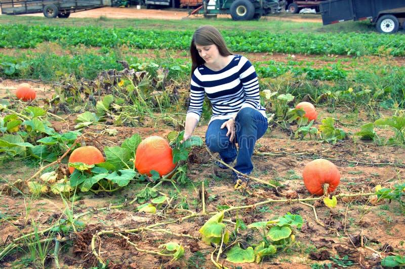 Download Pumpkin Patch stock image. Image of raising, farm, fall - 70032527