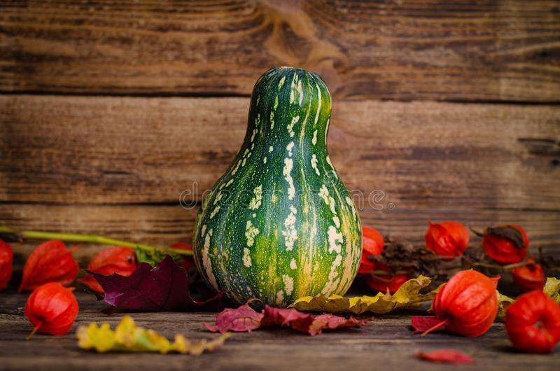 Pumpkin and physalis on rustic wooden background. Selective focus. Rural still life royalty free stock images
